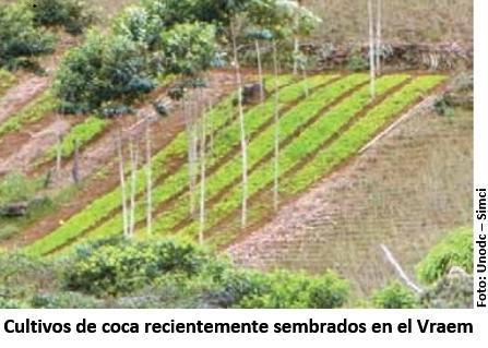 Desde Perú: Monitoreo de Cultivos de Hoja de Coca 2016.