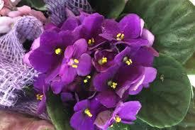 ¿Qué representa soñar con el violeta como color principal en tu ensoñación?