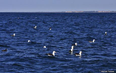 Salida pelágica en Mar del Plata (diciembre  2017)