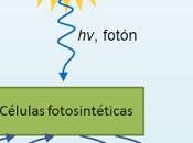 Fotosíntesis: introducción fotosíntesis anoxigénica