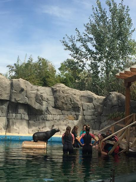 Idea de regalo: baño con osos marinos