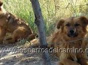 Adopta perro abandonado