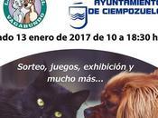 feria adopción animal Ciempozuelos. Enero.