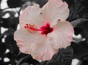 flores, color rosa