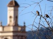 salir pájaros?