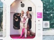 Parker, casita inteligente para perros mientras haces recados tranquilo