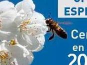 OFERTA Cerezo Flor 2018. Valle Jerte