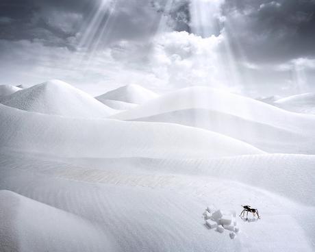 Insectos en la nieve