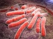 Reprograman Células Madres para Tratar Tuberculosis