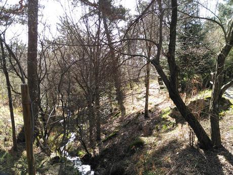 Arboreto Luis Ceballos | Monte Abantos