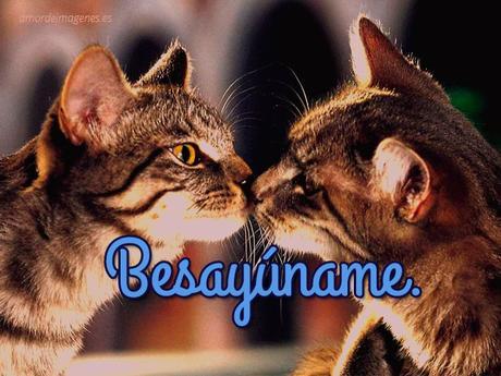 bellos gatitos besándose
