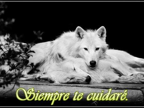 Hermosos Lobos Blancos Con Frases Románticas Paperblog