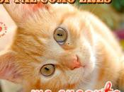 Frases Amor para Amantes Gatos