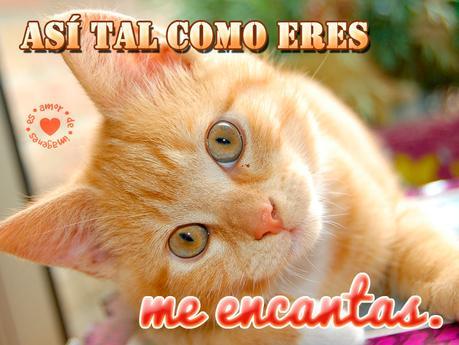 Frases De Amor Para Los Amantes De Los Gatos Paperblog