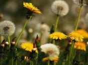 importante debes saber sobre malas hierbas como tratarlas