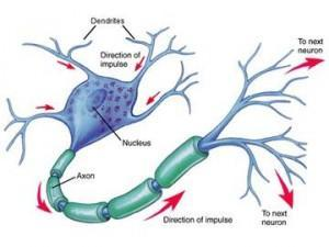 Neuronas artificiales para destruir el Alzheimer