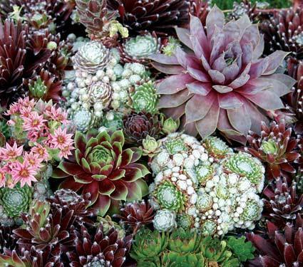 http://subirimagen.infojardin.com/sube/images/klz1285994344v.jpg