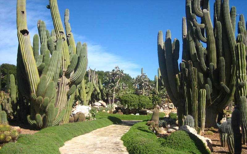 http://www.visitacasas.com/wp-content/uploads/2009/02/plantas-deserticas.jpg