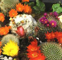 http://www.dekogarden.es/WebRoot/StoreES2/Shops/61635447/4B1F/DA42/8713/E4E4/ABB8/C0A8/28BC/67C9/cactus.jpg