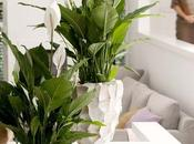 especies plantas bonitas, indestructibles purificadoras aire