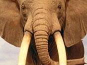 empresa elefante gacela