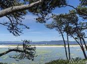 Cíes, símbolo Galicia, donde sobran personas lugares más)