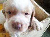 cruel negocio venta perros: adopta, compres