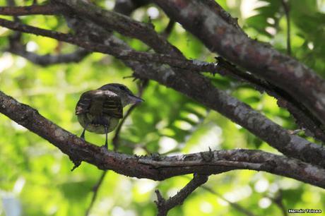 Censo Neotropical de Aves Acuáticas en Cañuelas (febrero 2018)