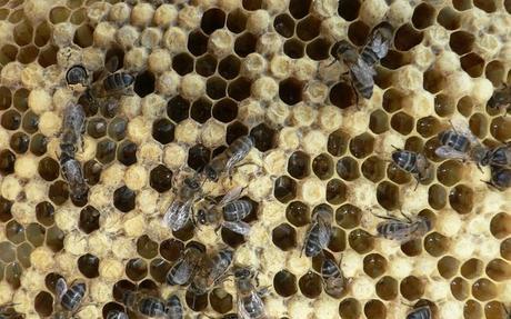 La Diputación de Toledo ofrece dos cursos sobre iniciación y perfeccionamiento de la apicultura