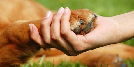 Declaración Universal de Derechos Animales (sensocentrista)