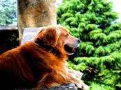 Cómo elegir buen canguro buena residencia canina