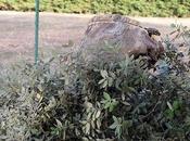 Hacer nidos naturales