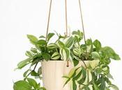 mejores plantas colgantes