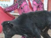 toros, corridas enanitos toreros