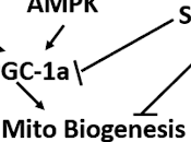 Artículo comentado: triglicéridos cadena media mejoran resistencia ejercicio través aumento biogénesis metabolismo mitocondrial