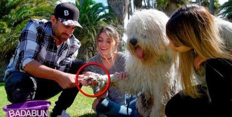 Mira cómo debes bañar a un perro. Comparte
