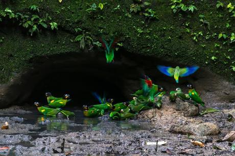 Parque Nacional Yasuní