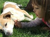 razas perro adecuadas para convivencia niños pequeños