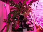Cultivando espacio: paso para vivir otros planetas