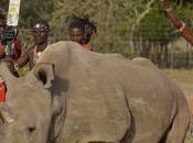 Murió último rinoceronte blanco mundo