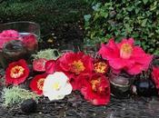 Marzo, flores demás. March, flowers rest.