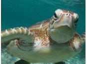 Salven tortugas