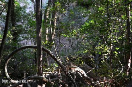 flora parque nacional tsingy de bemahara madagascar