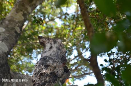 lemur nocturno parque nacional tsingy de bemahara madagascar