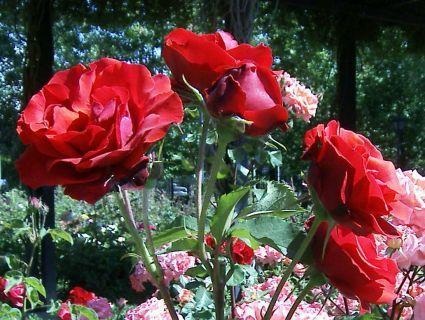 La Floración según la época del año