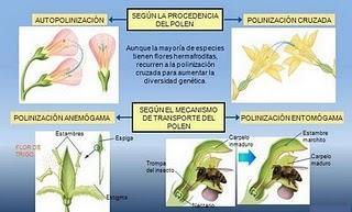 Polinización en las Plantas y Tipos