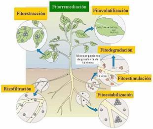 Plantas descontaminantes para la cocina