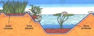 Clasificación de las Plantas Acuáticas