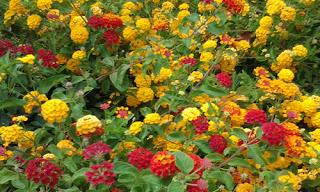Plantas ornamentales tóxicas para las mascotas