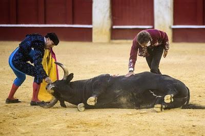 El PP se empeña en bendecir el sacrificio sangriento de los toros.
